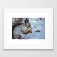 squirrel Framed Art Prints featuring Squirrel by Svetlana Korneliuk