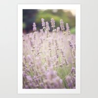 lavender Art Prints featuring lavender by Sarah Brust