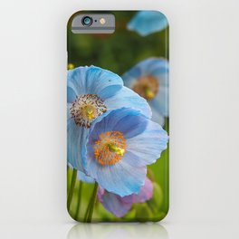 Blue Himalayan Poppies iPhone Case