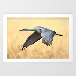 Crane over golden fields Art Print