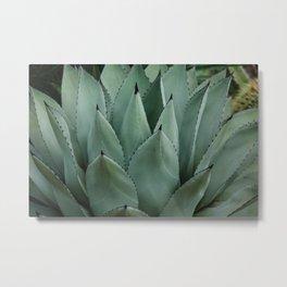 Black Tip Cactus Metal Print