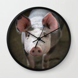 Funny Pig Wall Clock