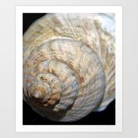 shell Art Prints featuring Shell by Brian Raggatt