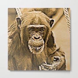 Vintage Look- Chimp 216 Metal Print