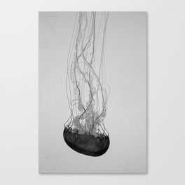 Jellyfish Basics no. 1 Canvas Print