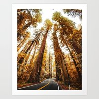 red woods forest in california Art Print