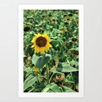 Flower No 6 Art Print