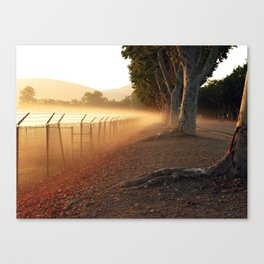 Summer Fog in the Breeze Canvas Print