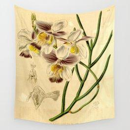 Papilionanthe teres (as syn. Vanda teres) Wall Tapestry