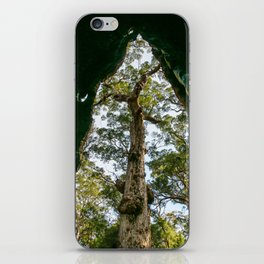 Giant Tingle Tree, Denmark, Western Australia iPhone Skin
