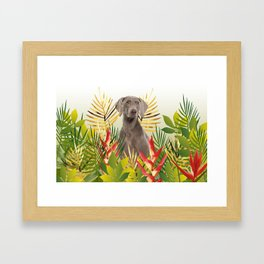 Weimaraner Dog in garden Framed Art Print
