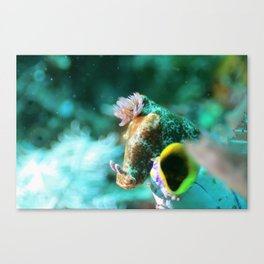 Ethereal nudibranch Canvas Print