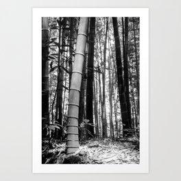 Kyoto Bamboo Art Print