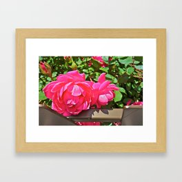 Stopping to smell the roses - Channel Gardens, Rockefeller Center - NYC Framed Art Print