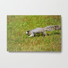 Southern Fox Squirrel Metal Print