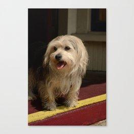 Storefront Dog Canvas Print