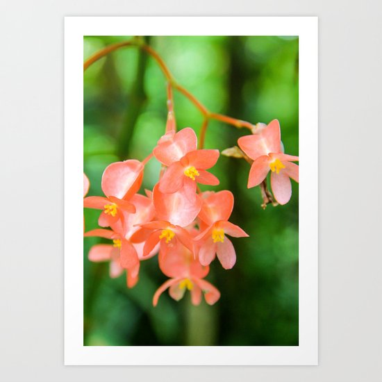 Flame-Of-The-Woods Flower Art Print