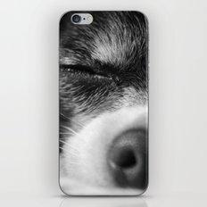 Rufio Sleeping iPhone & iPod Skin