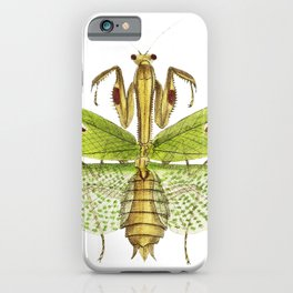 Sacred mantis or Idol mantis  from The Naturalists Miscellany (1789-1813) by George Shaw (1751-1813) iPhone Case
