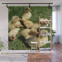 little goslings wildlife and ducklings in the meadow Wall Mural