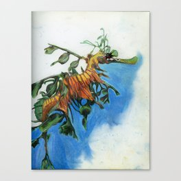 Study of a Leafy Water Dragon Canvas Print