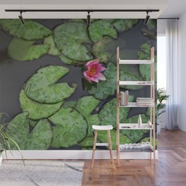 Afloat Lily Pad Nature Photograph Wall Mural