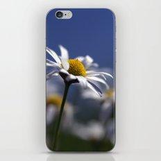 Daisies 3610 iPhone & iPod Skin