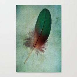A Gift from a Parrot Canvas Print