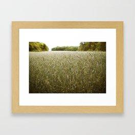 summer field Framed Art Print