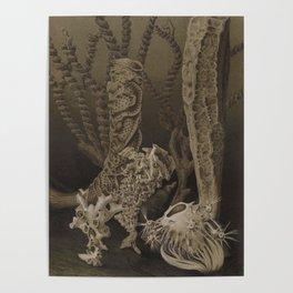 Vintage Sea Sponges Poster