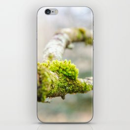 Branch in the Fall iPhone Skin