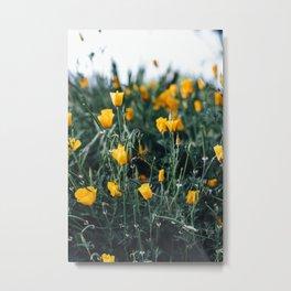 california poppy Metal Print