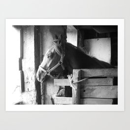 In the Stables Art Print
