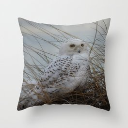 snowy owl in sand dunes Throw Pillow