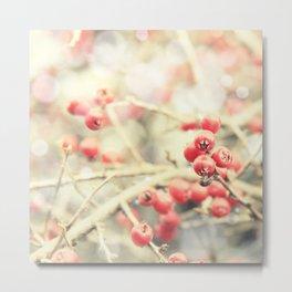 Beautiful Red Berries in the Sunshine Metal Print