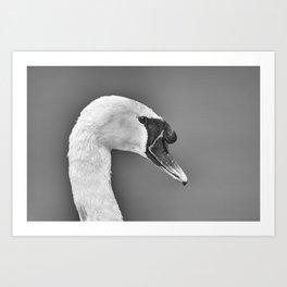 1046375 Mute Swan Art Print