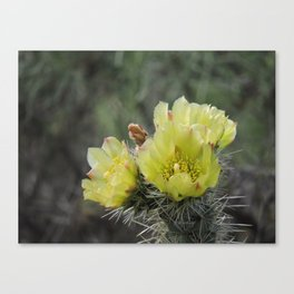 California Cactus Blooms Canvas Print