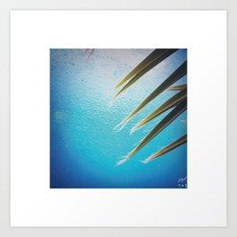 palm leaves and rain Art Print