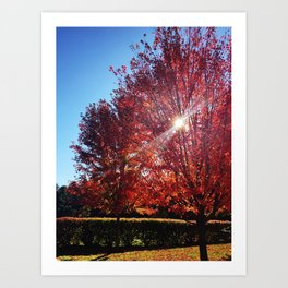 Red Leaves on Campus Three Art Print