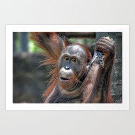 Orangutan Art Print