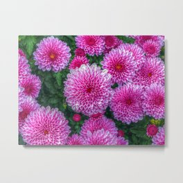 Purple Mums Metal Print
