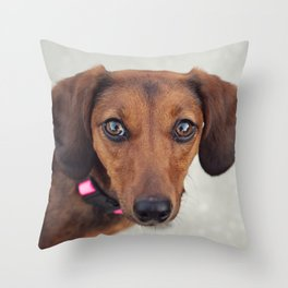 Doxie Dares You  Throw Pillow