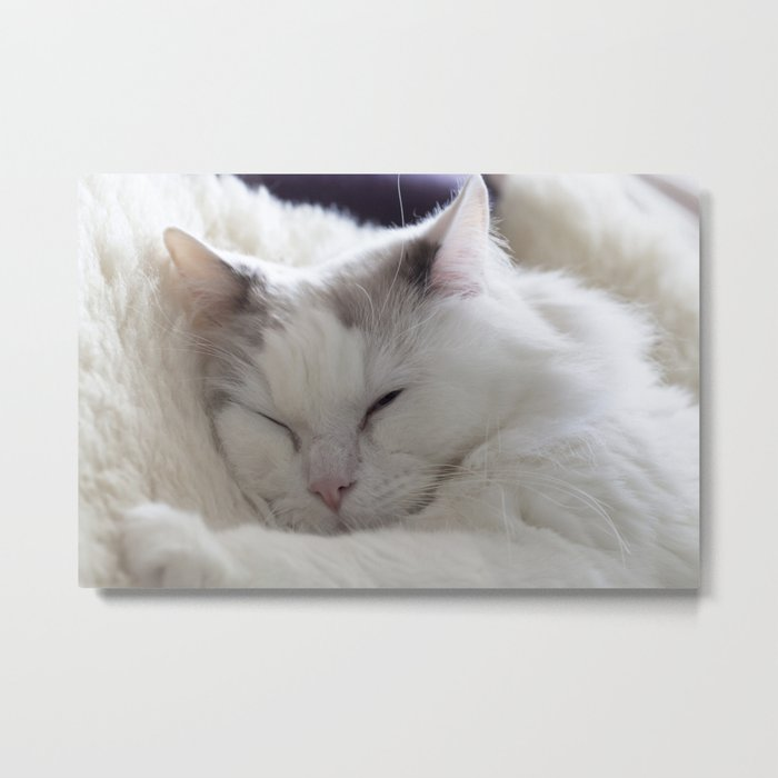 Ragdoll Cat Cuddles Metal Print