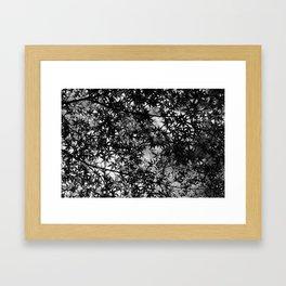 Monochrome maple Framed Art Print