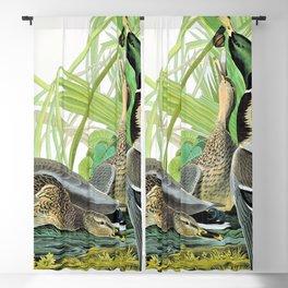 12,000pixel-500dpi - Mallard Ducks - John James Audubon Blackout Curtain