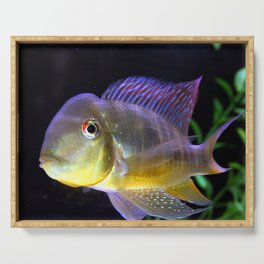 Electric color Cichlid Serving Tray