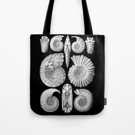 Sea Shells and Fossils (Ammonitida) by Ernst Haeckel Tote Bag