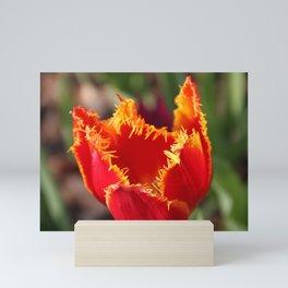 Tulip - Red with Ruffles Mini Art Print
