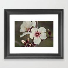 Almond Blossoms on a Budding Branch Framed Art Print