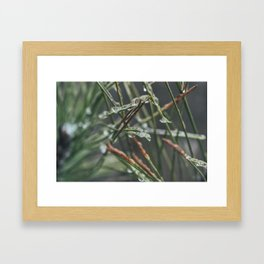 Icy Greens Framed Art Print